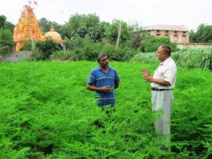 Moringa wächst auch in trockenen Regionen