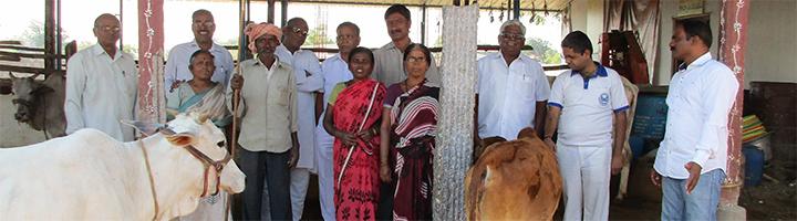 Trustmitglieder in ihrem Goshala in Warangal, Maharshi Goshala Charitable Trust