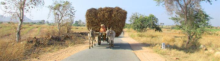 Indien, Bauern suchen einen Weg aus der Krise, Farmer mit Ochsenkarren